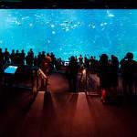 世界最大の1枚アクリルパネル水槽を有する水族館ランキング